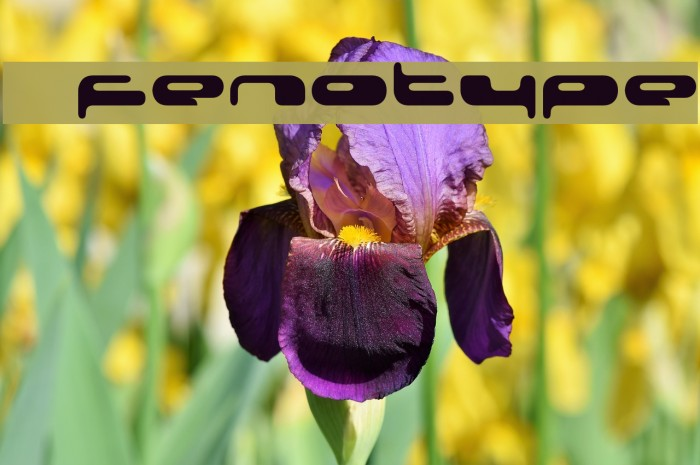 080203  Fenotype Шрифта examples