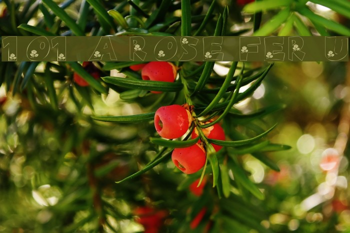 101! A Rose fer U Font examples