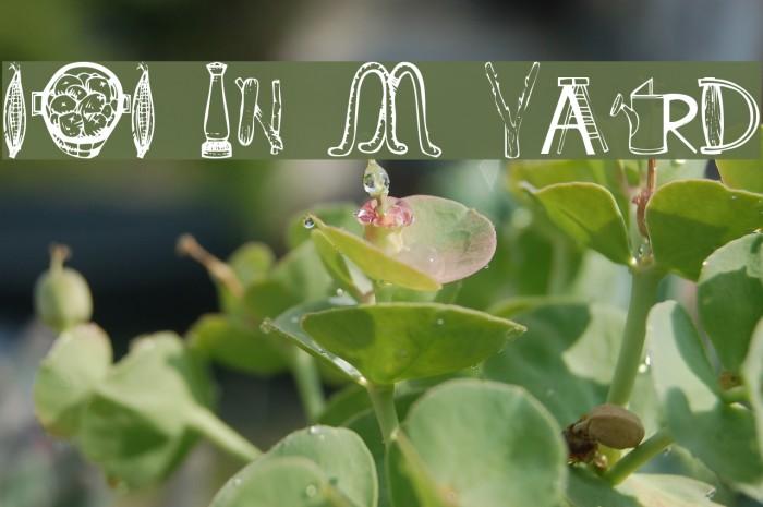 101 In My Yard لخطوط تنزيل examples