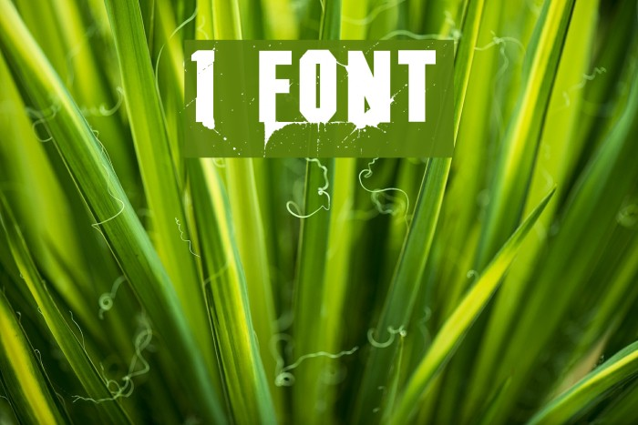 1 Font examples