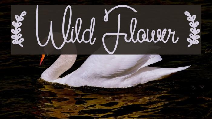 ( Wild Flower ) لخطوط تنزيل examples