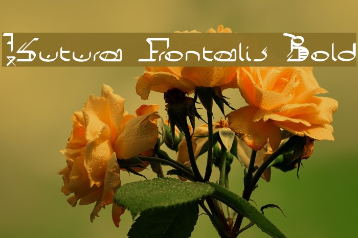 !Sutura Frontalis Bold Caratteri examples