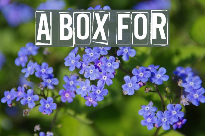 A Box For Font examples