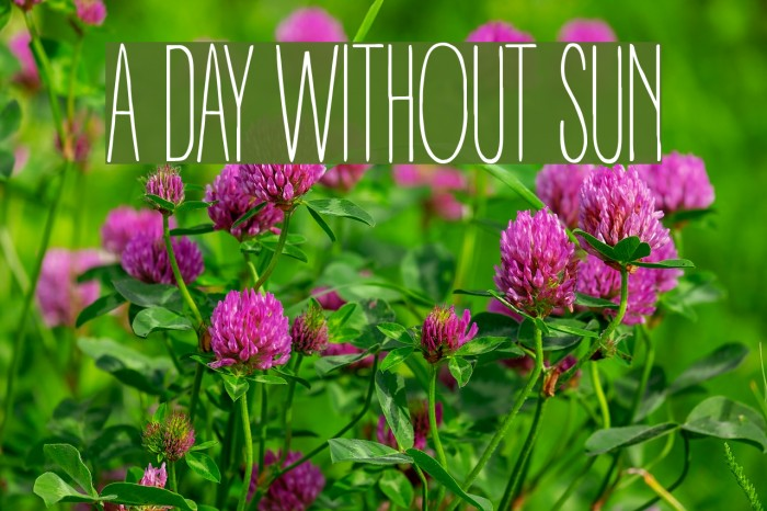 A DAY WITHOUT SUN Fonte examples