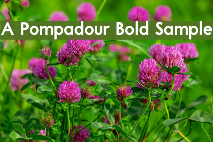 A Pompadour Bold Sample フォント examples