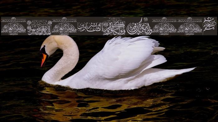 Aayat Quraan_041 Fonte examples