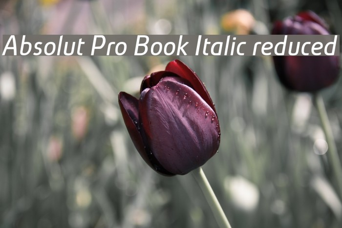 Absolut Pro Book Italic reduced Font examples
