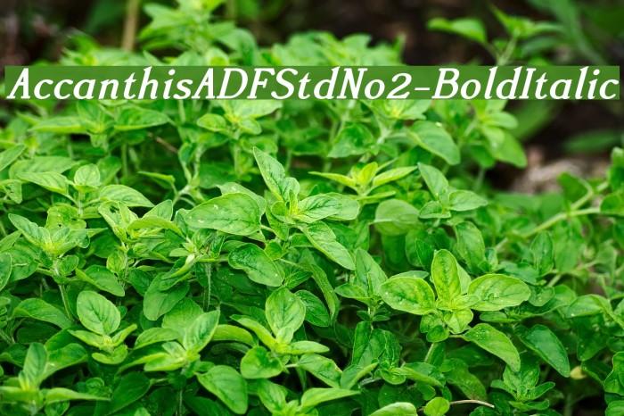 AccanthisADFStdNo2-BoldItalic Fonte examples
