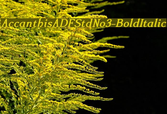 AccanthisADFStdNo3-BoldItalic फ़ॉन्ट examples