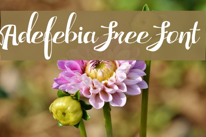 Adefebia Free Font フォント examples