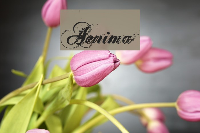 Aenima Font examples