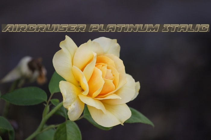 Aircruiser Platinum Italic フォント examples