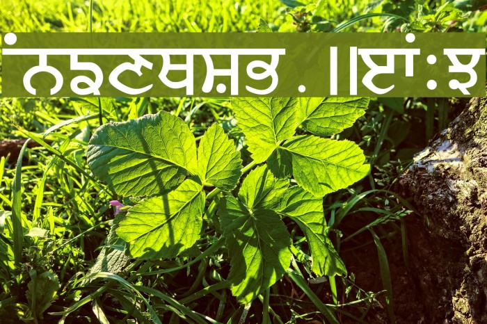 Ajit Font examples