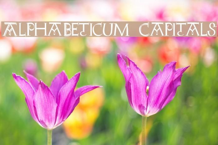 AlphaBeticum Capitals Font - free fonts download