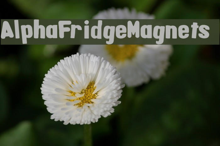 AlphaFridgeMagnets  Fonte examples