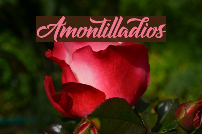 Amontilladios Шрифта examples