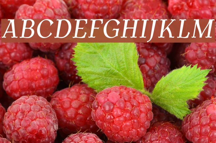 AntykwaTorunskaCond-Italic Font examples