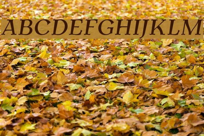 AntykwaTorunskaMed-Italic Шрифта examples