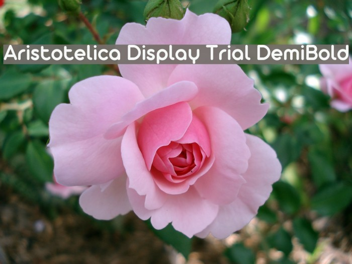 Aristotelica Display Trial DemiBold Schriftart examples