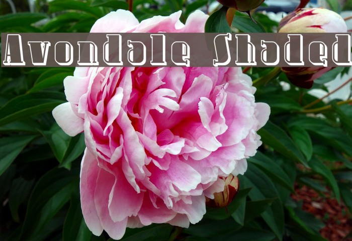 Avondale Shaded फ़ॉन्ट examples