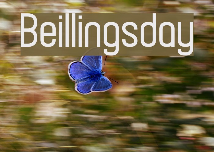 Beillingsday フォント examples