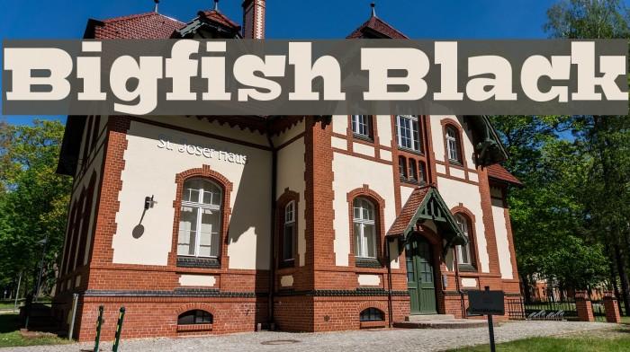 Bigfish Black Font examples