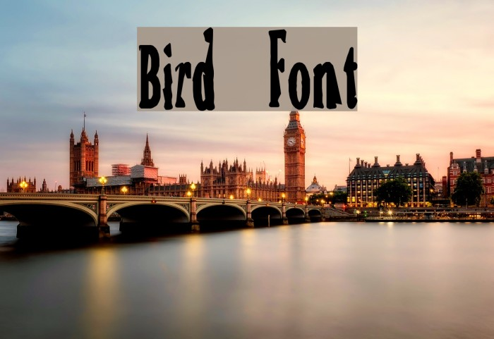 Bird Polices examples