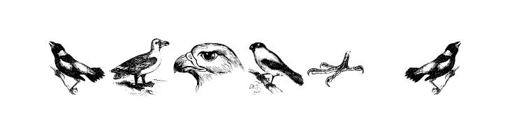 birds a  Скачать бесплатные шрифты