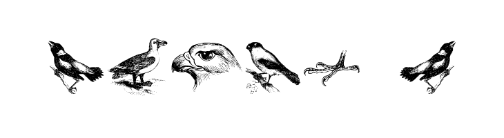 birds a  baixar fontes gratis