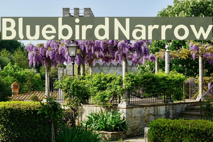 Bluebird Narrow Fonte examples