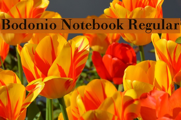 Bodonio Notebook Regular Font examples
