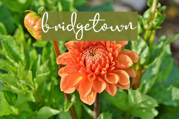 bridgetown 字体 examples