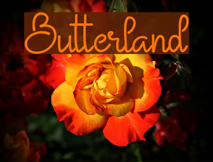 Butterland Font examples