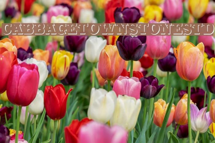 CabbagetownStoneStd Font examples