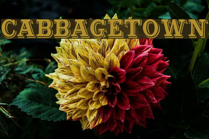 Cabbagetown Font examples