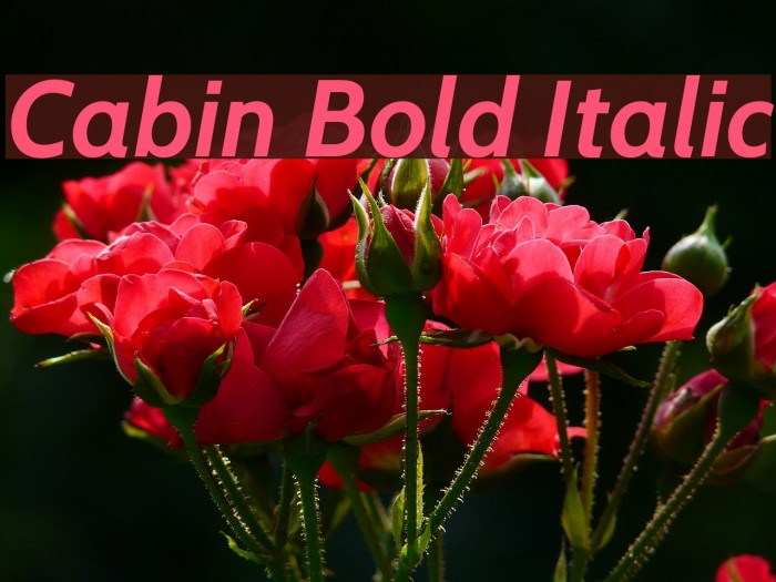 Cabin Bold Italic Font examples