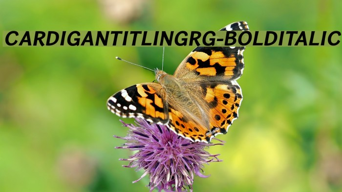 CardiganTitlingRg-BoldItalic Fonte examples