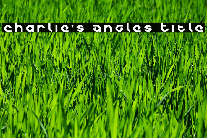 Charlie's Angles Title Polices examples