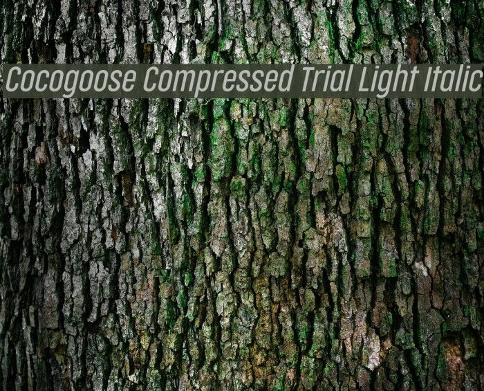 Cocogoose Compressed Trial Light Italic Schriftart examples