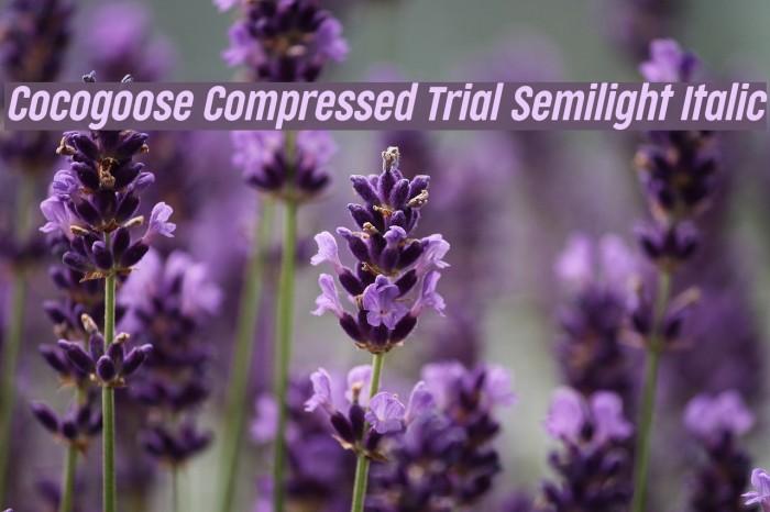 Cocogoose Compressed Trial Semilight Italic Font examples
