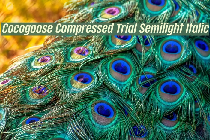 Cocogoose Compressed Trial Semilight Italic Schriftart examples