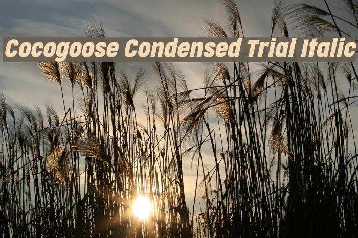 Cocogoose Condensed Trial Italic Schriftart examples