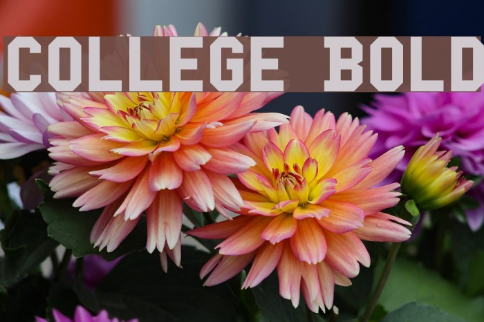 College Bold Caratteri examples