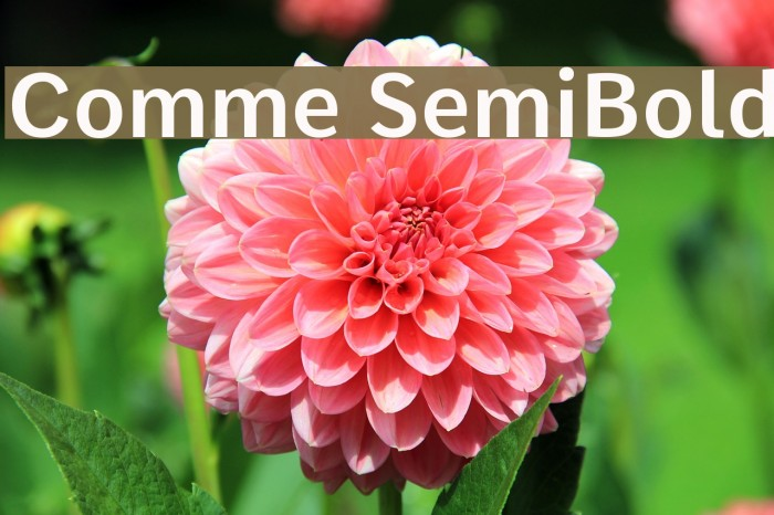 Comme SemiBold Fonte examples