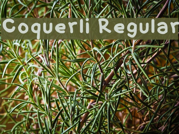 Coquerli Regular फ़ॉन्ट examples