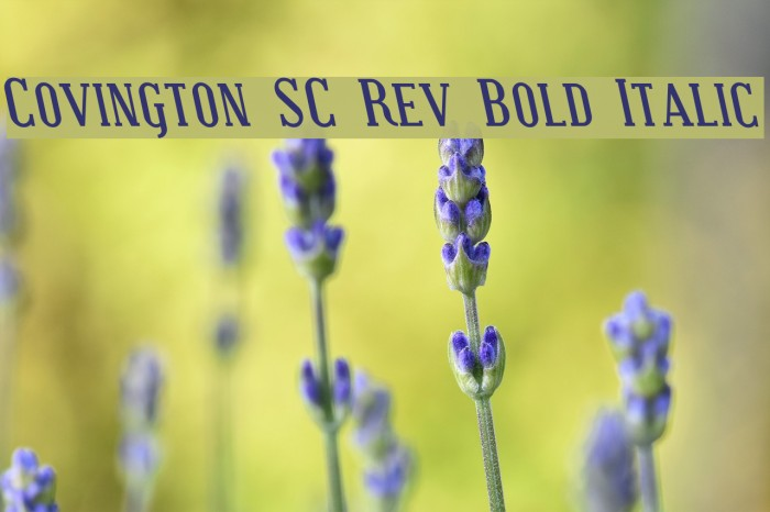 Covington SC Rev Bold Italic Font examples