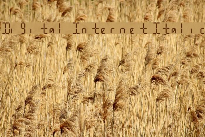 Digital Internet Italic Font examples