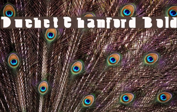 Duchet Chanford Bold Font - free fonts download