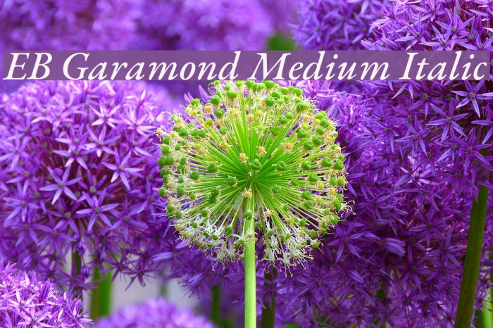 Learn These Eb Garamond Medium {Swypeout}