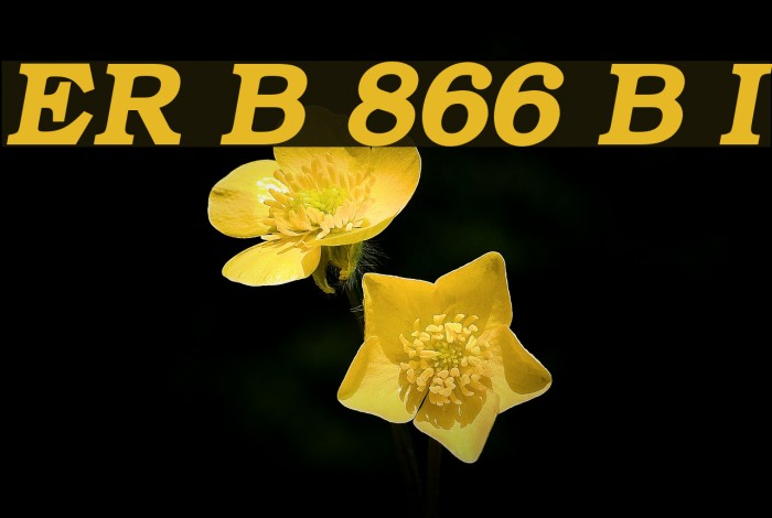 ER Bukinist 866 Bold Italic फ़ॉन्ट examples